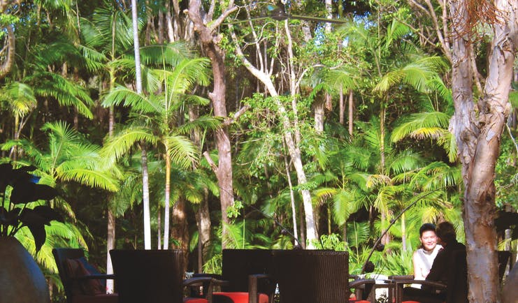 The Byron at Byron New South Wales rainforest seating area in front of rainforest trees