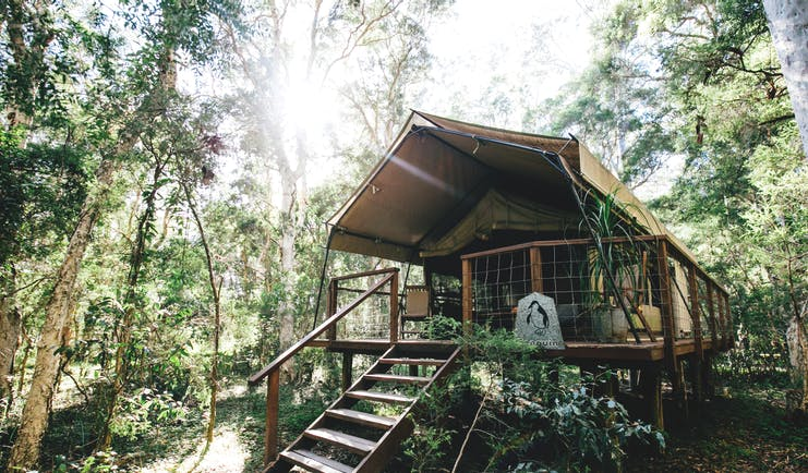 Paperbark Camp New South Wales safari tent steps to tent on a raised deck