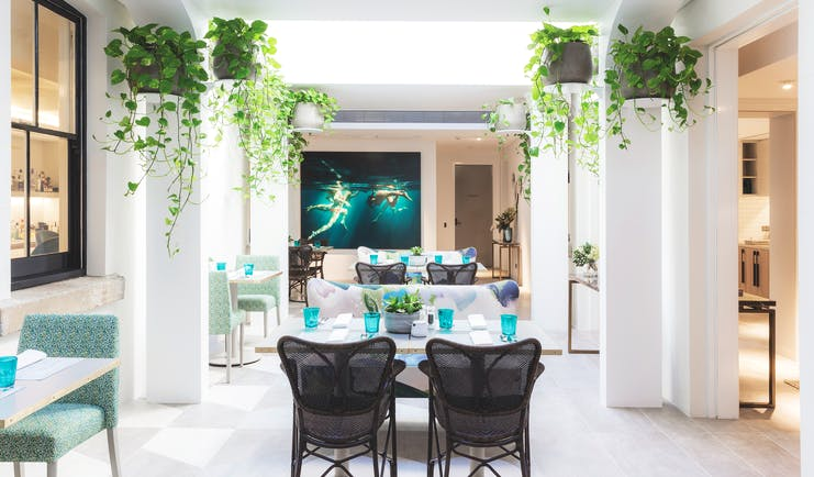 Spicers Potts Point communal garden room with potted plants hanging from the ceilings and chairs set up