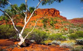 Australian landscape in the Northern Territory, trees, scrub land, mountain in background