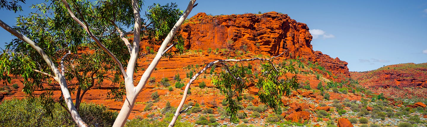 Red sandstone mountain with tree