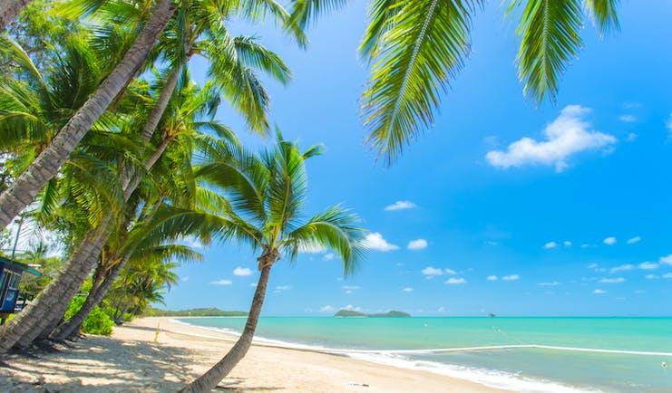Clifton Beach in Tropical North Queensland, palm tree, white sand, clear blue sea