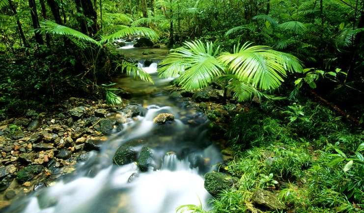 Daintree Forest Queensland, foliage and running river