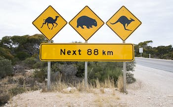 Road sign warning against camels, wombat, kangaroo in Eucla, South Australia
