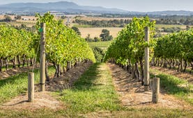 Yarra Valley vineyard, Victoria, vine trees, rural landscape