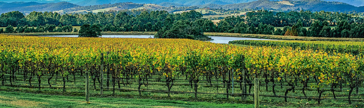 Winery in Yarra Valley, vine trees, rural landscape, mountains and lake in background