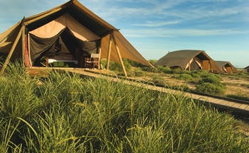 Sal Salis wilderness tent exterior shown in a row of tents with long grass growing outside