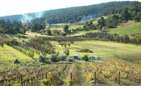 Bickley vineyard, western Australia, vine trees, rural scenic background