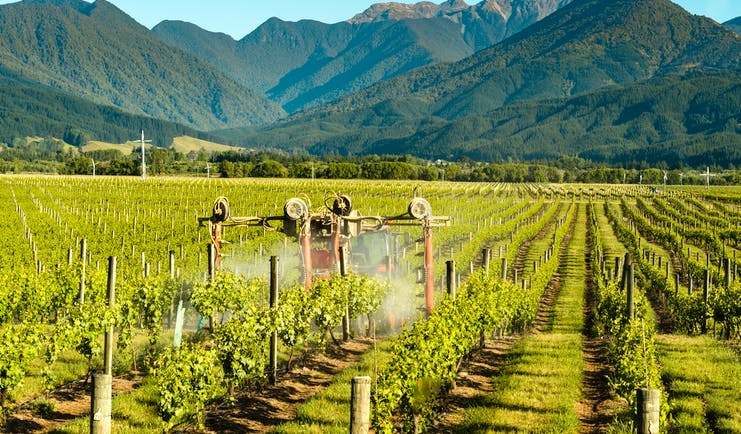 Vineyard in Marlborough, machine harvesting grapes, mountains in background