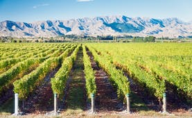 Vineyards in the Marlborough Wine Region in New Zealand, vine trees, mountains in background