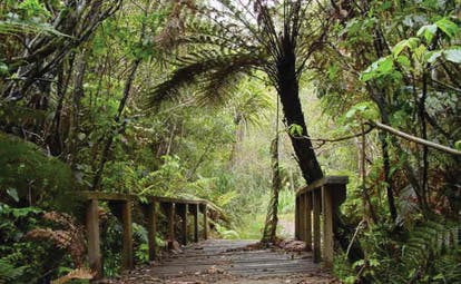 Treetops Lodge Central North Island trail wooden bridge in a forest