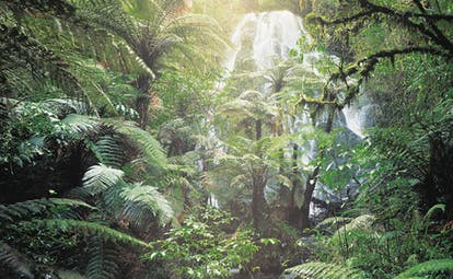 Treetops Lodge Central North Island waterfall in a forest