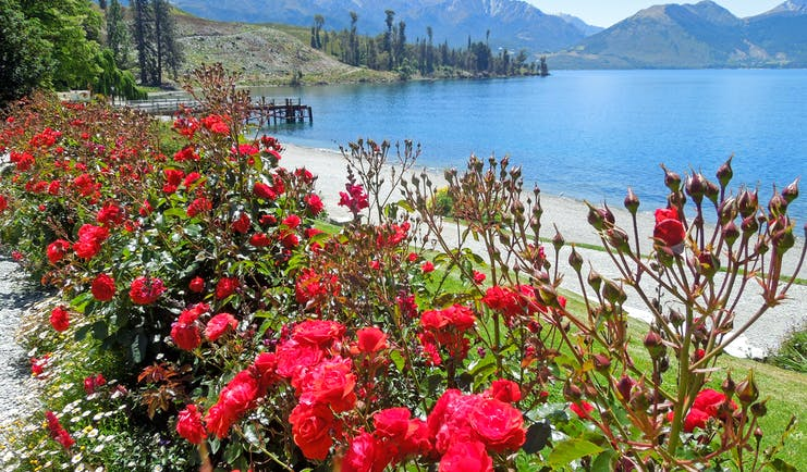 Lake in Walter Peak High Country Farm on the South Island, clear blue water, mountains, red flowers