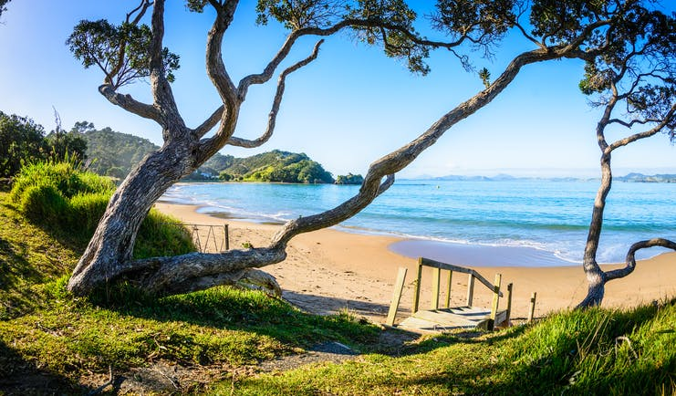A beach in the Northland regions, golden sand, blue waters, pohutukawa tree