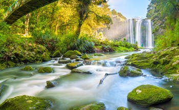 Whangarei Falls in Northland, New Zealand, waterfall, river, rocks, verdant trees and greenery