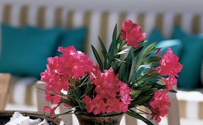 Jumby Bay Antigua pink flower arrangement