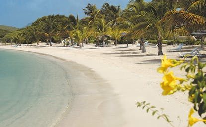 St James's Club Antigua beach waves lapping on the shore white sand palm tree