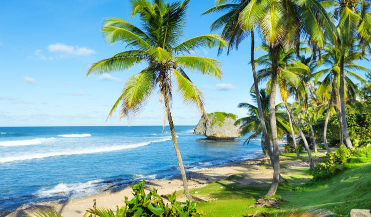 Soup Bowl beach in Barbados, palm trees, sand, ocean