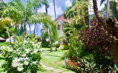 Gardens with palm trees and flowers on a grassy lawn