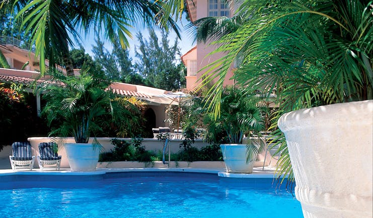 Tamarind Barbados pool large fern plants