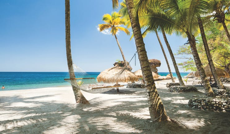 Anse Chastanet St Lucia palm trees on the beach hammock white sand