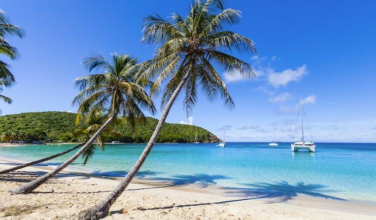 Beach on the Grenadines, white sand, blue seas, palm tree