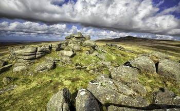 Sheep on moor with rocks in distance Devon