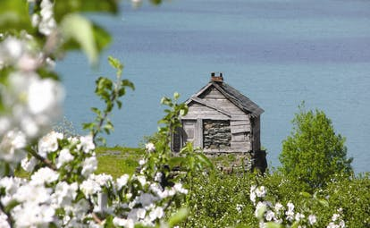 Hotel Ullensvang Norway blossom on tree and hut by water