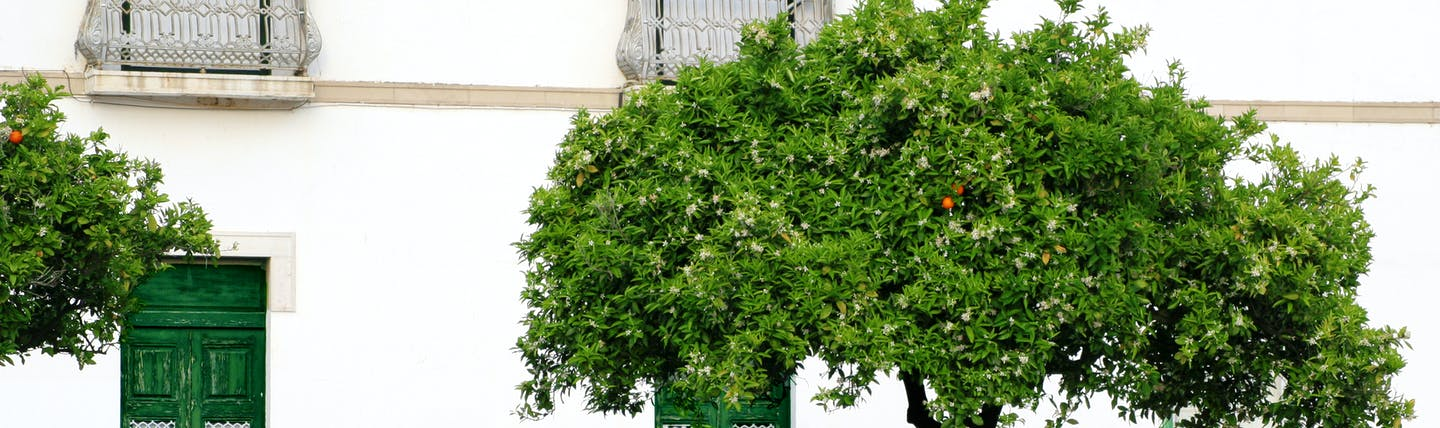 Vila Real de Santo Antonio in Portugal, shot of street, bike propped against a tree, white buildings, green doors