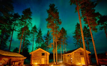 Arctic Retreat, northern lights over the cabins, tall pine trees