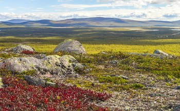 Tundra scene with grasses and rock at Kiruna