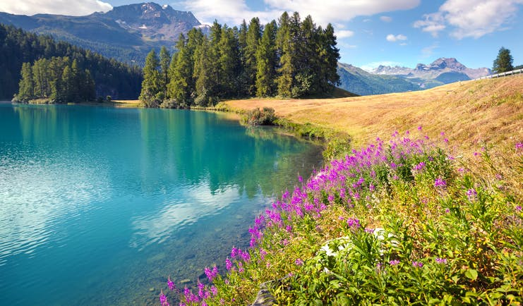 Lake Champfer, turquoise waters, pink flowers, fir trees, mountains in background