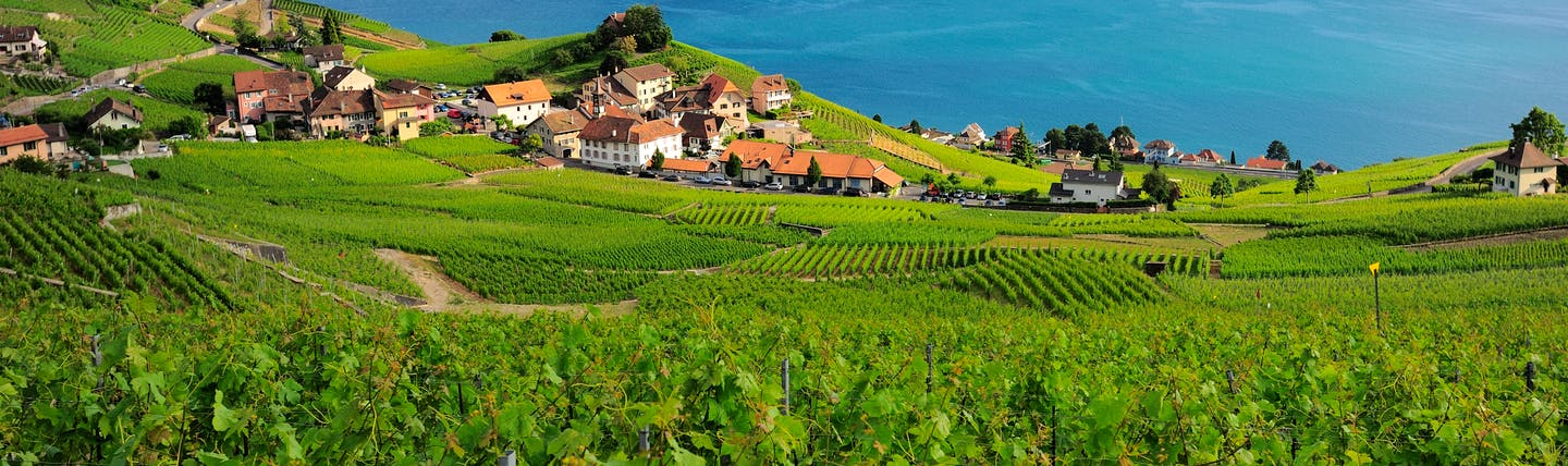 Village overlooking Lake Geneva, vineyards, cottages, lake, mountains in background