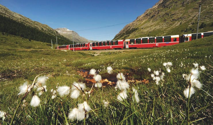 Red train with white flowers in field