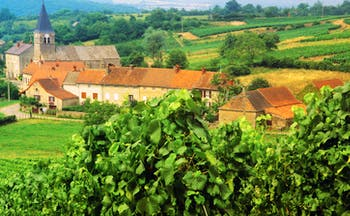 Vines and village view in Alsace