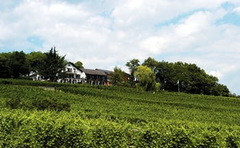 Le Clos Saint Vincent Alsace countryside white building with grey roof overlooking green fields