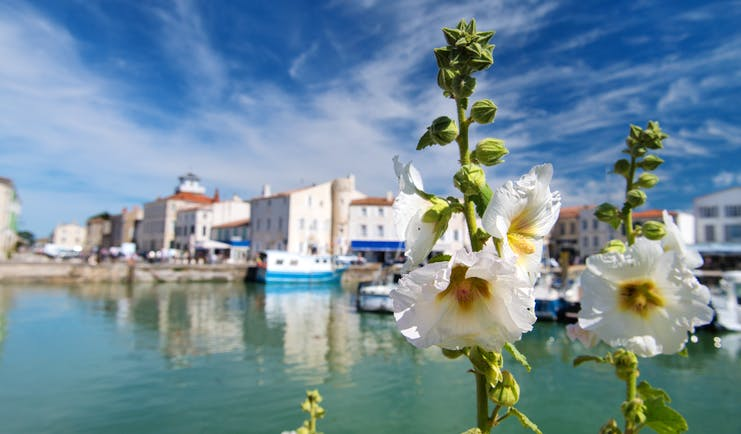Ile de Re harbour with blue boats and hollyhocks