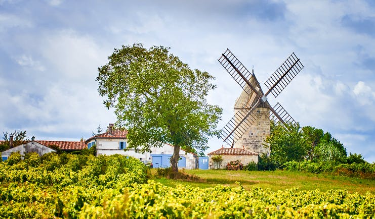 Windmill standing amid vineyard on a hill in Bordeaux region