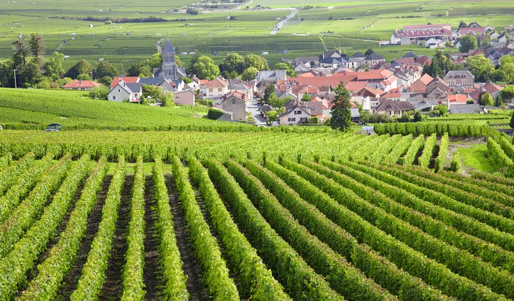 Rows of vines in Burgundy with village in background