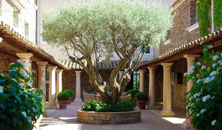 Chateau de Valmer shady courtyard with old olive tree