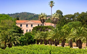 Chateau de Valmer view of the chateau with vines and palms