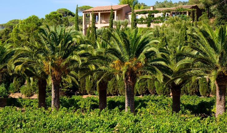 Chateau de Valmer palms with building in distance