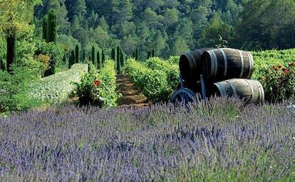 Chateau de Berne Provence lavender winery wine barrels