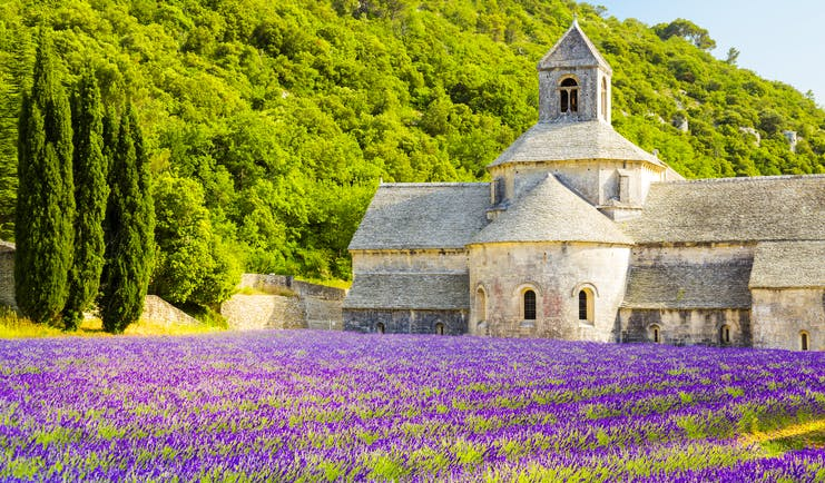 Field of lavender in foreground at the Abbaye de Senanque in Provence