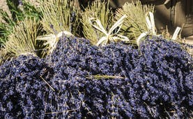 small bunches of lavender in south of france