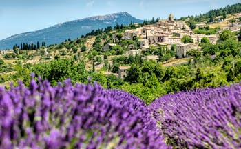 Village of Gordes with lavender clumps in the foreground