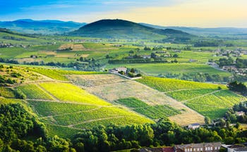 View of vineyards of Brouilly in Rhone valley in early morning light