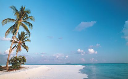 Beach with palm trees on, clear blue skies and white sand