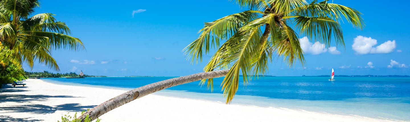 A palm tree on a beach in Herathera Island in the Maldives, white sand, clear blue sea
