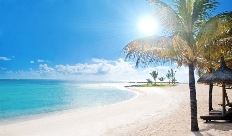 Beach with palm tree and sun high in the sky